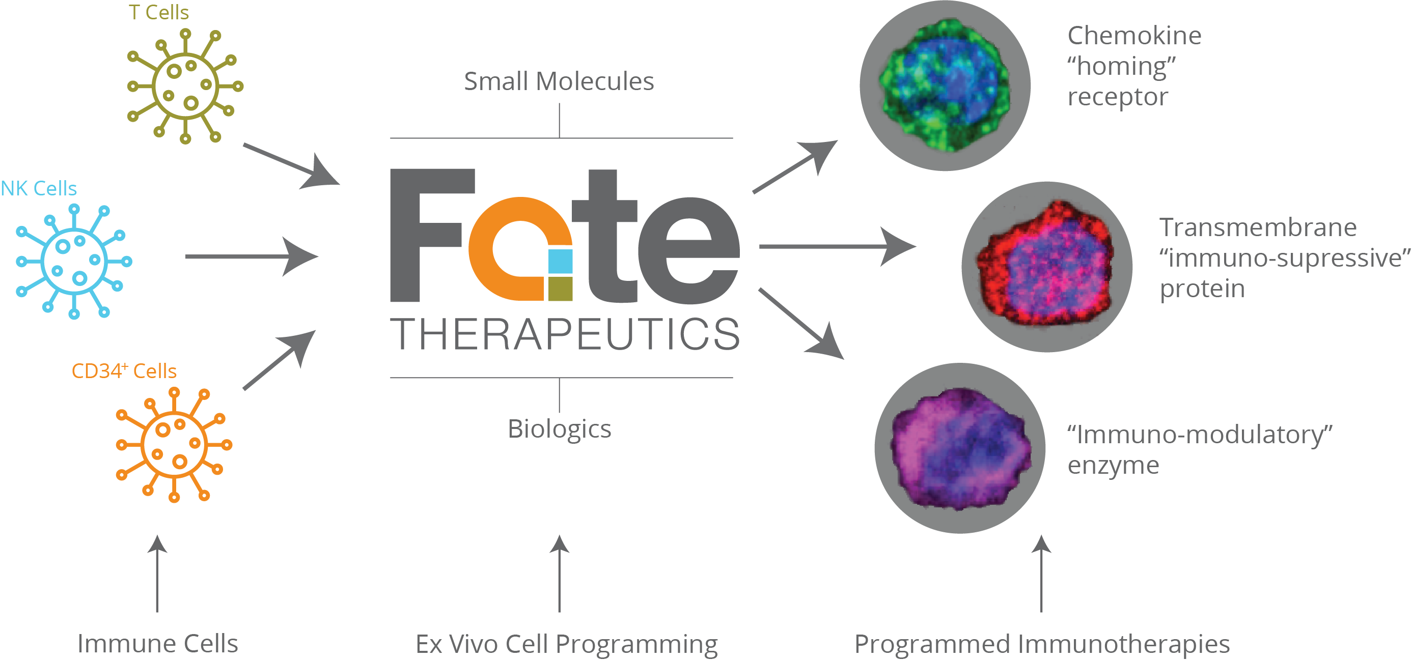 Ex vivo cell modulation fate therapeutics programming cell function ccuart